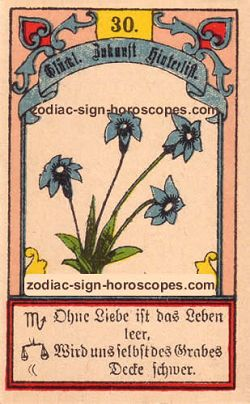 The lily, monthly Scorpio horoscope November